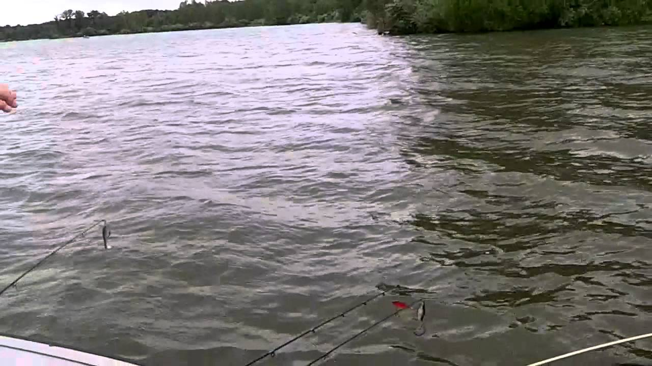 Fishing alum creek youtube for Central ohio fishing report