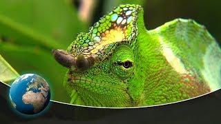 Bizarre animal appearances