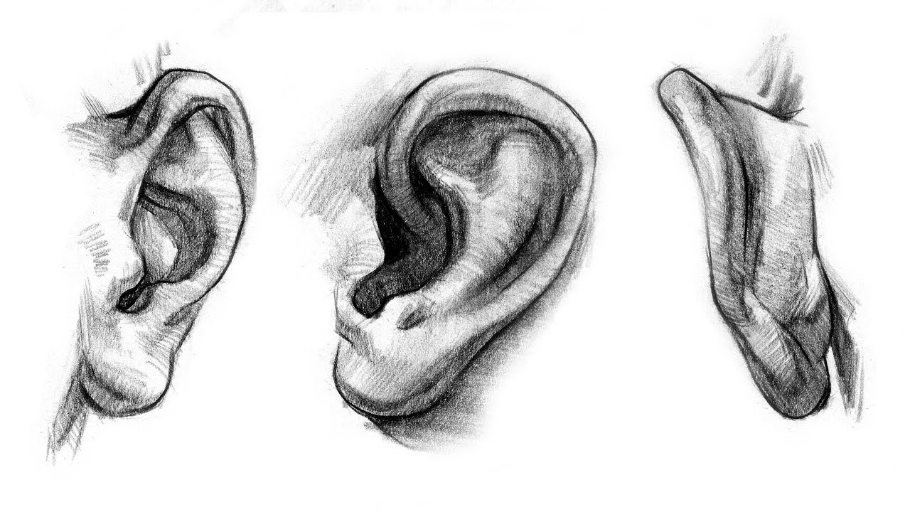 How to Draw Ears - Anatomy and Structure - YouTube