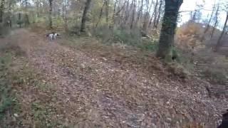 Chasse aux faisans