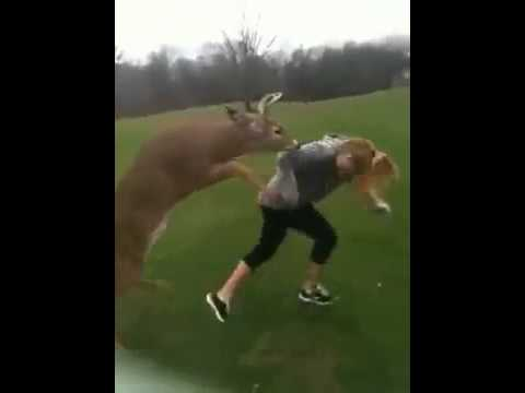 Variety thankfulness anime video of deer fucking girl