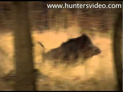 passion-for-hunting-hunters-video.html