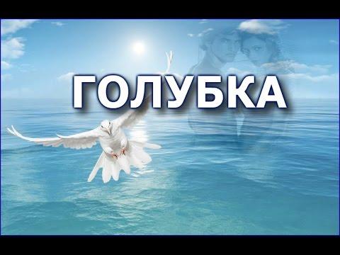 Ренат Ибрагимов - Голубка