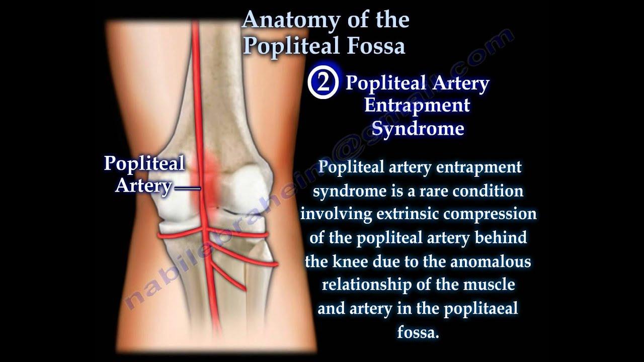 Anatomy of Popliteal Fossa Anatomy of The Popliteal Fossa