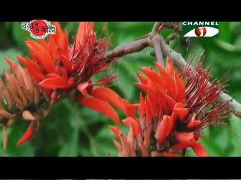 Nature and Life - Episode 96 (Flowers of Bangladesh)
