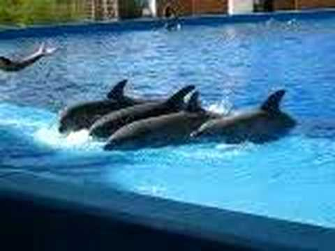 Delfines cantando Video