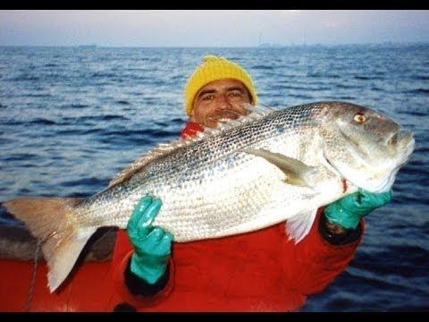 La pesca in Voronezh e i piedi di regione di Voronezh