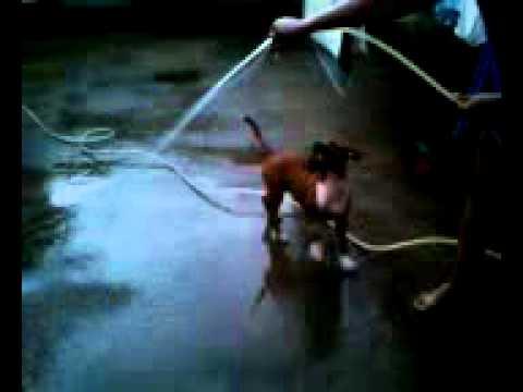Sabrina tomanho banho de mangueira sem roupa.mp4