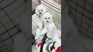 Look at these cute and funny puppies dogs 1688