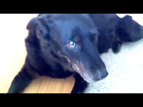 Maisie R.i.p. -- A Tribute To A Girl And Her Dog video