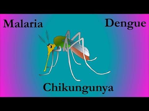 Malaria  , Dengue , Chikungunya
