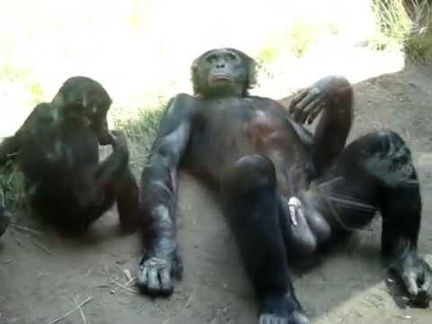 Monkey with big balls