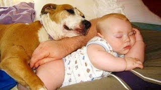 Dogs And Babies Are Best Friends   Dogs Babysitting Babies