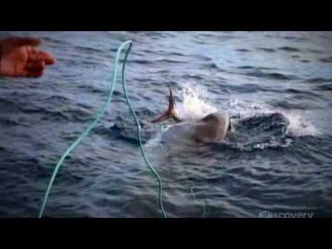 Shark Week 2009 - Great White Appetite (Part 2)