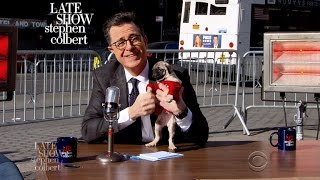 The Late Show's Street Show: Taking It To The Street, Vol. 2