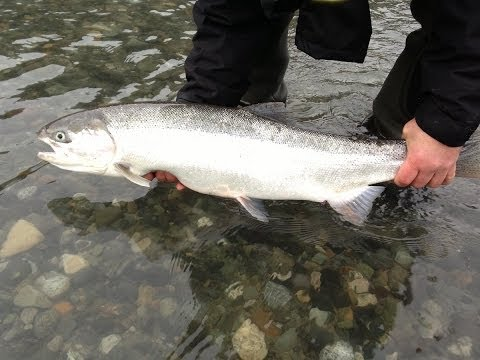 Steelhead fishing with Brian Mack - Vedder river BC