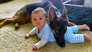 Brave Dog Saves Baby From Swimming Pool! 9 Animals That Saved People