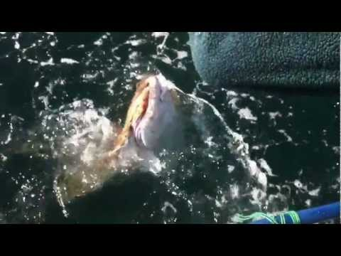 Prince Rupert Halibut Fishing.MOV