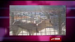 أنا الشاهد: سوق الحيوانات الأليفة في بغداد