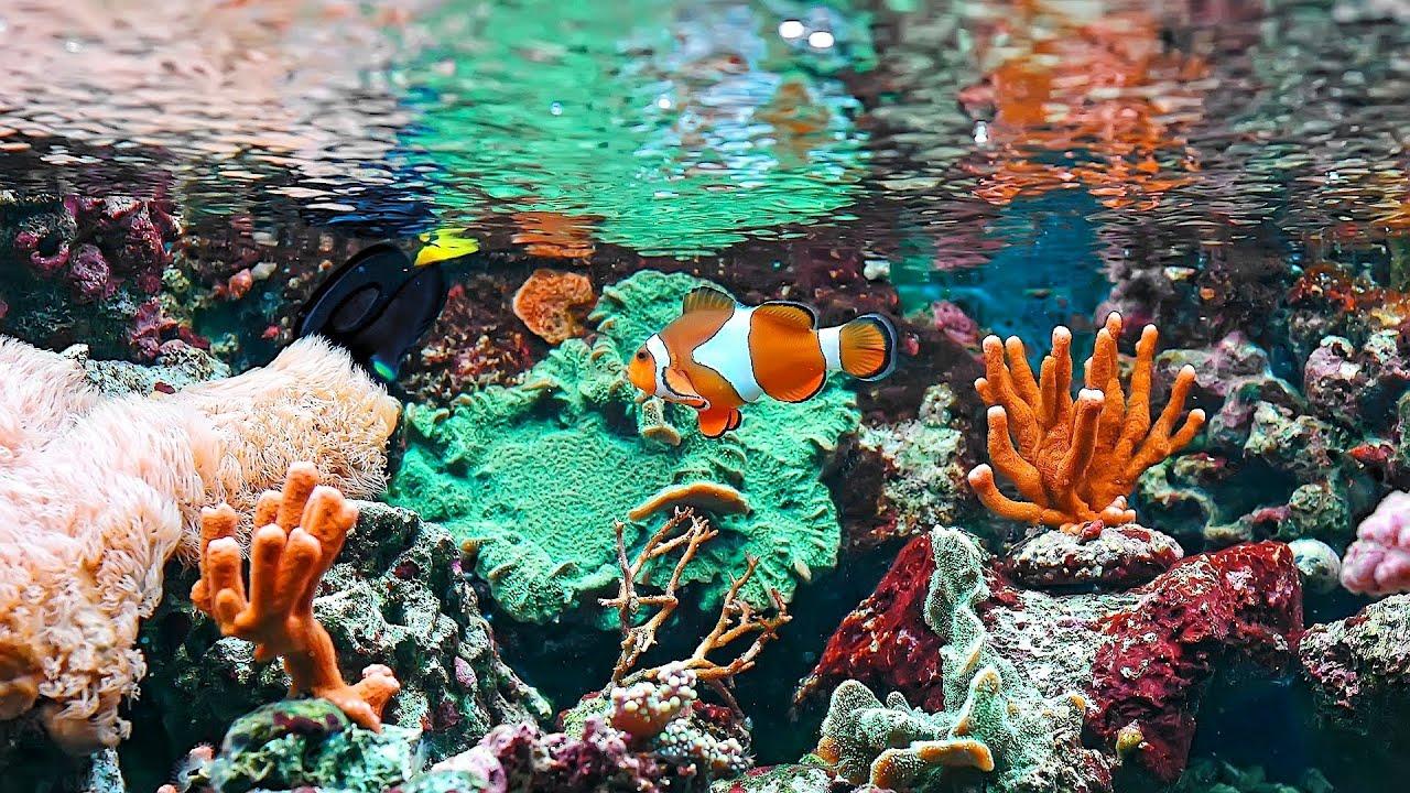 Saltwater aquarium fish tanks