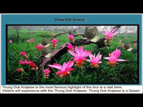 02Thung Dok Krajeaw   Thailand Travel Guide