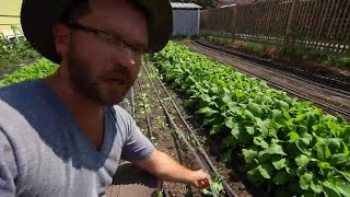 IN FOCUS: Drip Irrigation