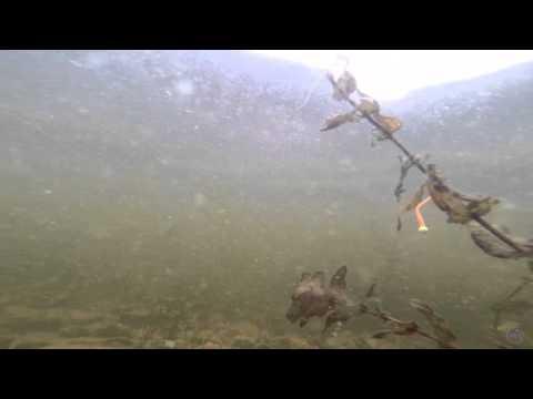 Berkley Mice Tails