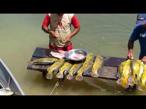 Pescaria No Rio Teles Pires 2014