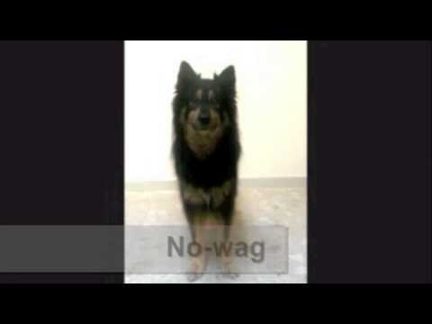 Direction of Tail Wag Shows Dogs Emotion