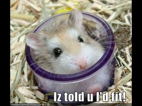 really funny animals with captions