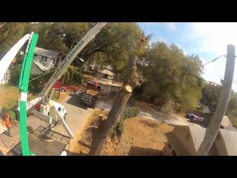 Giant Live Oak Crane Removal, Advance Tree Pros
