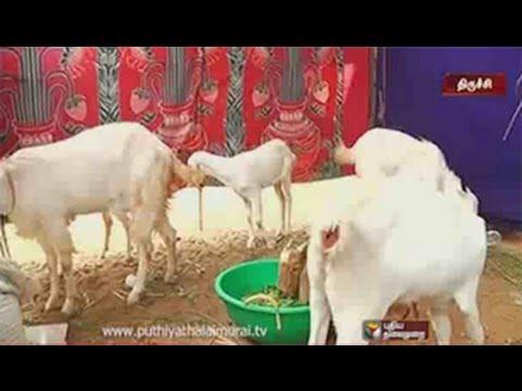 media aadu valarpu murai in tamil