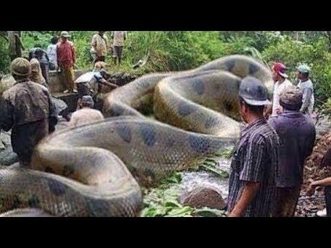 12 Interessante Tiere im Amazonas!