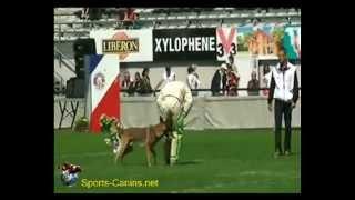 2014 - Gavroche du Banc des Hermelles - Jimmy Calvez - Finale Brive