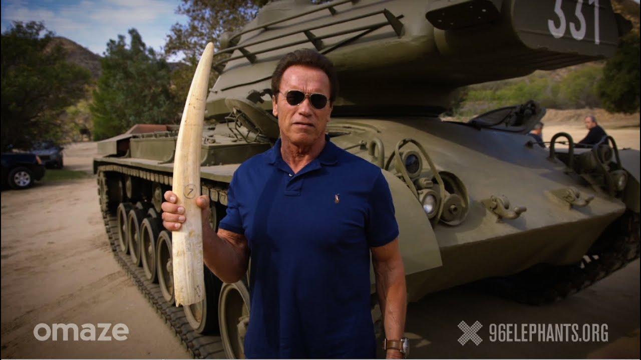 Schwarzenegger elefántagyarat robbant - videó