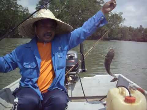 ikan sembilang 1.5kg