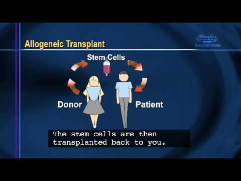 Bone Marrow Transplant Patient Information: Chapter 2 - Bone Marrow Transplants