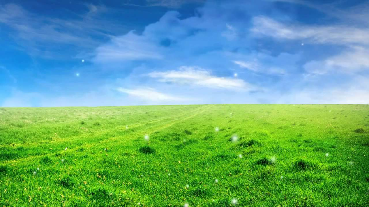 Field And Sky Background Sky Céu Video Background