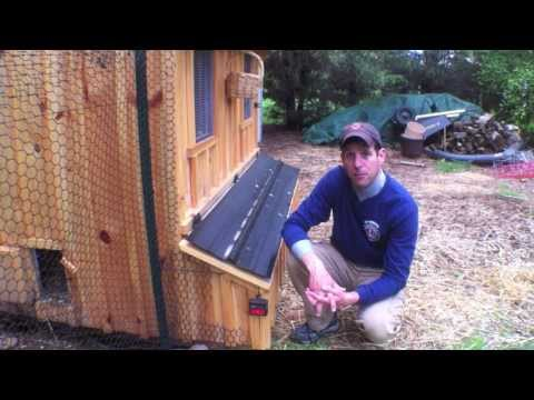 How to stop your chickens from eating their eggs Tips Help ideas