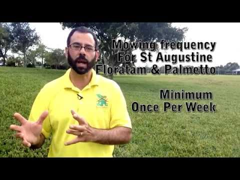 st augustine grass care tutorial #1