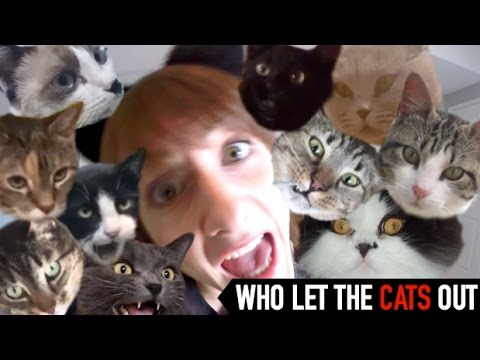 Who Let the Dogs Out - PARODY for *CATS*