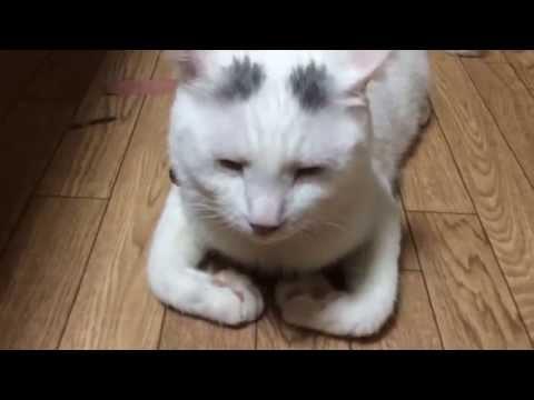妙な姿勢の猫1