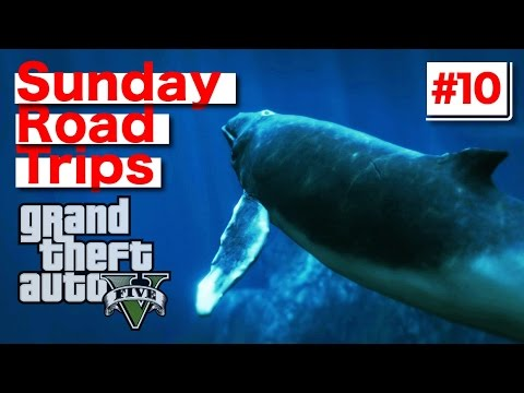 Sunday Road Trip: #10 (GTA 5) PS4 Gameplay Police Motorcycle/Shark/Humpback Whale Find