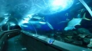 Underwater World, Singapore, HD Experience