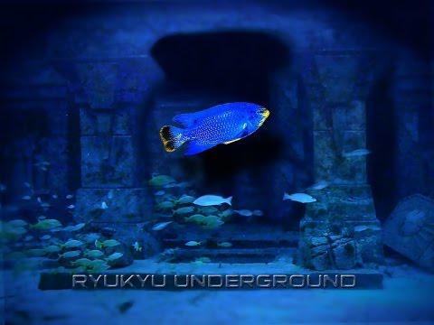Ryukyu Underground - Album One
