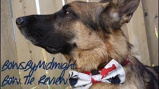 Review: BowsByMidnight Dog Collar Bow Tie