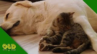Funny Cat and Dog Video Compilation July 2019 - Cats and Dogs Funny Pet Animals Vines
