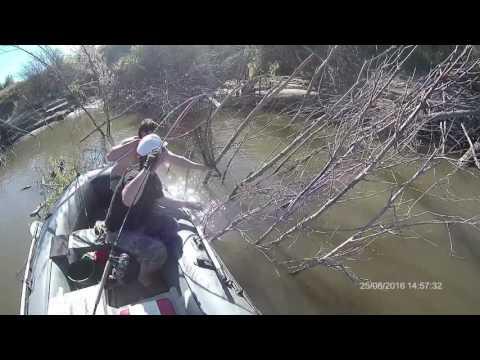 ловля очень крупного окуня видео