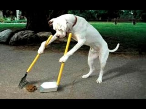 LAUGH SUPER HARD at these FUNNY ANIMALS & FAILS! Ultimate FUNNY ANIMAL & FAIL compilation