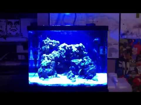 NEW KESSIL A350W LED REVIEW